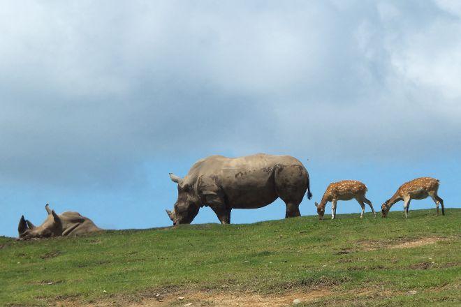 African Safari, Usa, Japan