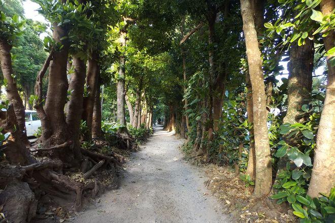 Bise no Fukugi Tree Road, Motobu-cho, Japan