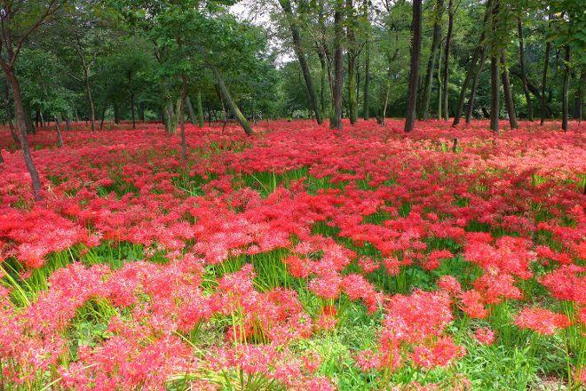 Kinchakuda Manjushage Park, Hidaka, Japan