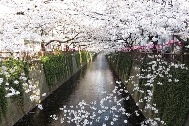 Meguro River, Tokyo, Japan