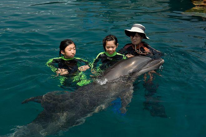 Muroto Dolphins Center, Muroto, Japan