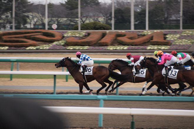 Nakayama Horse Tracks, Funabashi, Japan