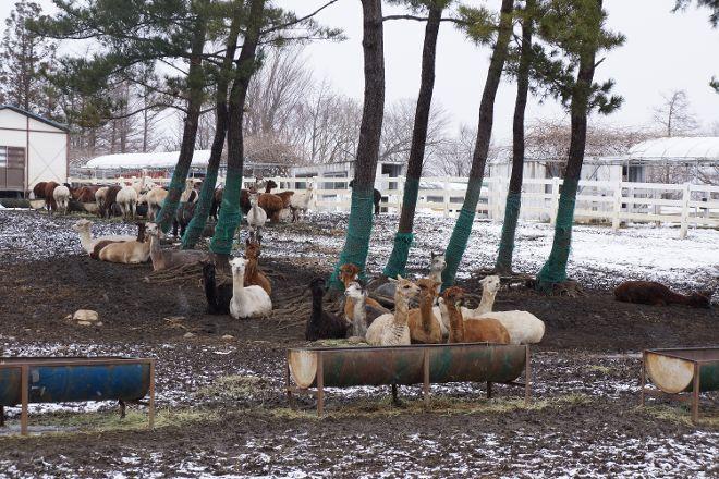 Nasu Alpaca Farm, Nasu-machi, Japan