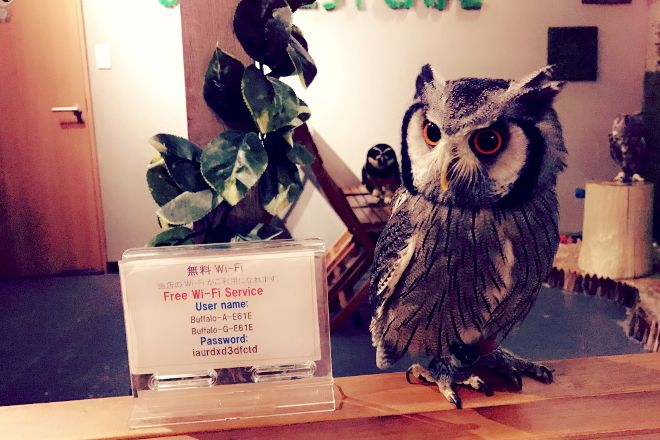 Owl Nest Cafe, Taito, Japan