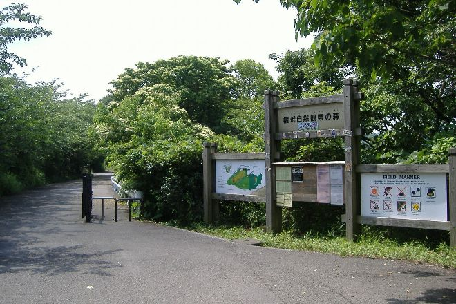 Yokohama Nature Sanctuary, Sakae, Japan