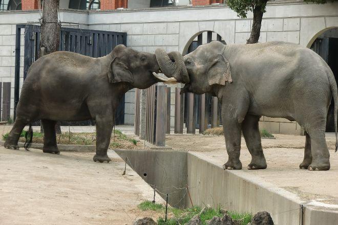 Yokohama Zoo ''Zoorasia'', Yokohama, Japan