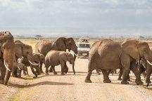 Bush Baby Safaris, Nairobi, Kenya