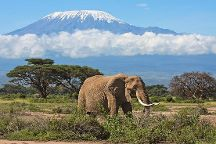 Bush Baby Safaris