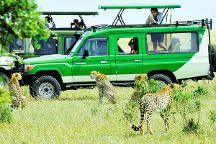 Bush Thorns Adventures and Safaris, Nairobi, Kenya