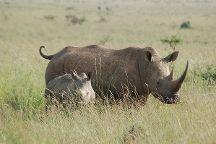 Civvet African Tours & Safaris, Amboseli National Park, Kenya