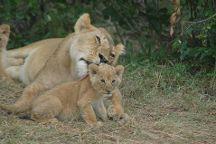 Ideal Kenya Safaris, Nairobi, Kenya
