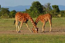 Kenya Expresso Tours and Safaris Ltd, Nairobi, Kenya