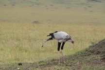 Kenya Safaris Holiday, Nairobi, Kenya