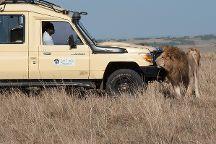 Lion Trails Safaris - Day Tours