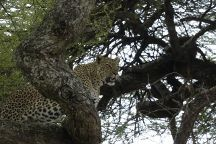 MK Snow Tours and Travel, Naro Moru, Kenya