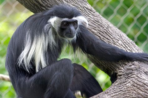 Colobus Conservation, Diani Beach, Kenya