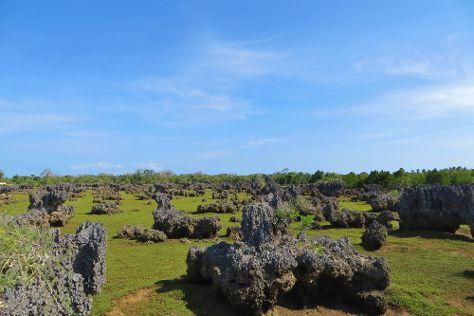 Coral Gardens, Wasini Island, Kenya