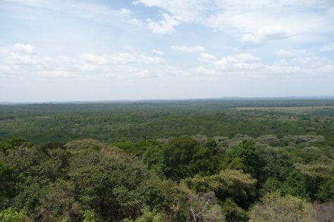 Kakamega Forest National Reserve, Kakamega, Kenya