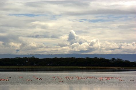 Lake Oloidien, Naivasha, Kenya