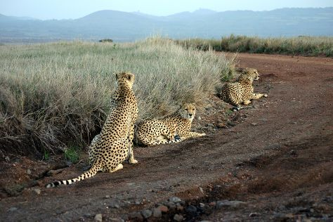 Lewa Wildlife Conservancy, Isiolo, Kenya