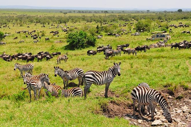 Absolute Holiday Safaris, Nairobi, Kenya