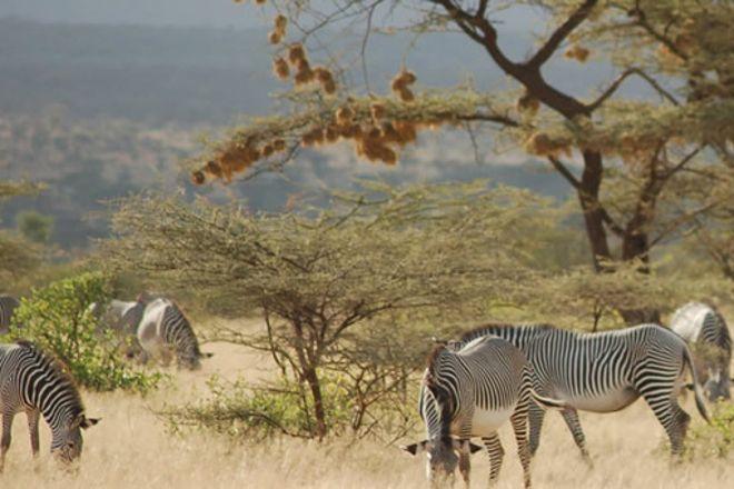 Africa Starpal Tours & Safaris, Nairobi, Kenya