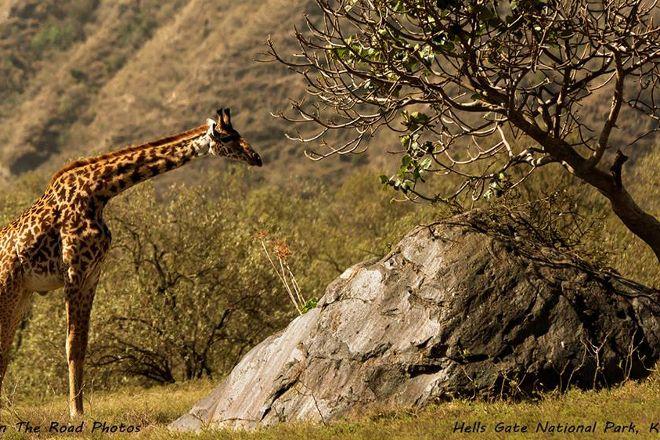 Africa Venture Safaris, Nairobi, Kenya