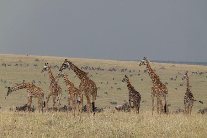 African Comfort Zone Safaris, Nairobi, Kenya