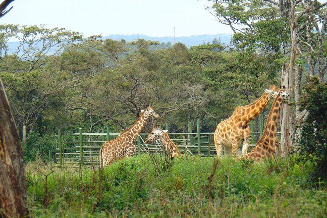 Ancient Wild Safaris, Nairobi, Kenya