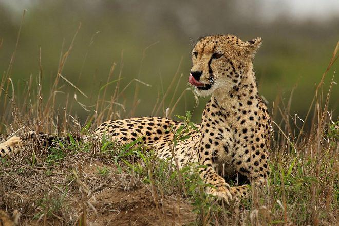 Dawn In Africa Safaris - Day Tours, Nairobi, Kenya