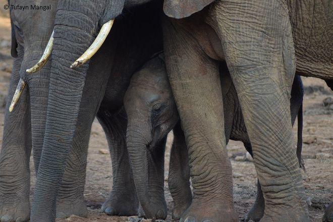 Explore Safaris by Tufayn, Nairobi, Kenya