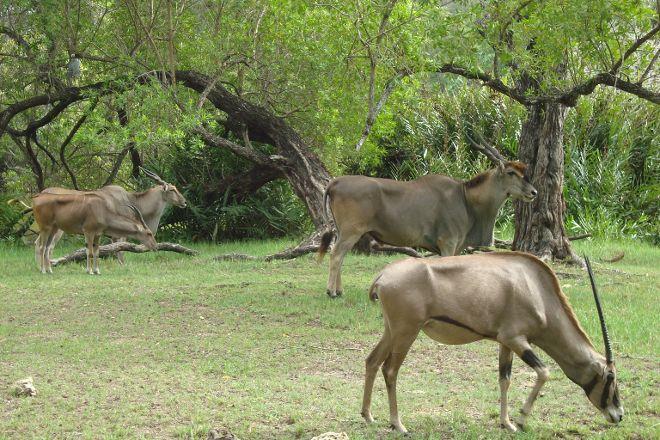 Haller Park, Mombasa, Kenya