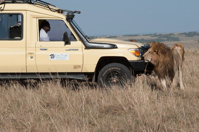 Lion Trails Safaris - Day Tours, Nairobi, Kenya
