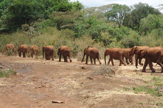 Mara North Conservancy, Maasai Mara National Reserve, Kenya
