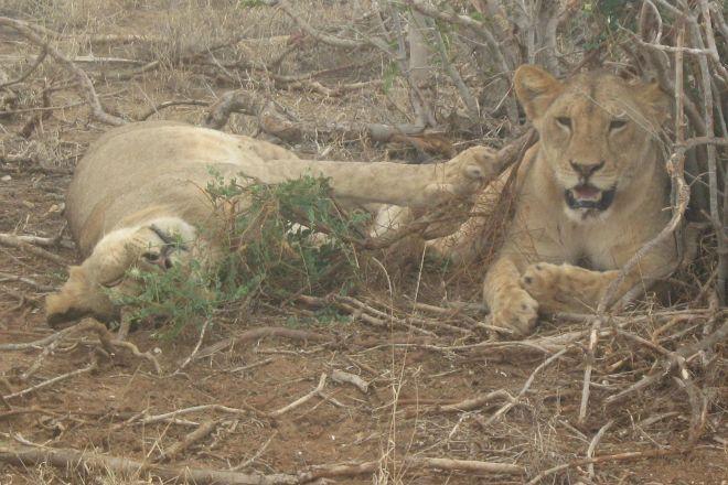 Marlomani Safaris, Mombasa, Kenya