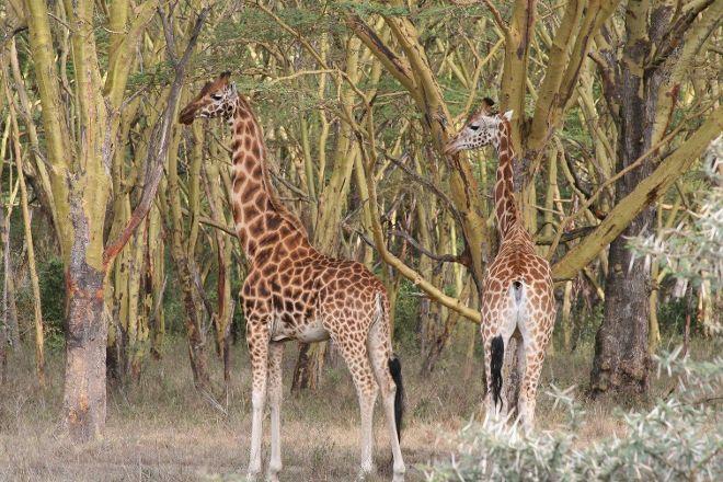 Max Favours Shuttles & Safaris, Nairobi, Kenya