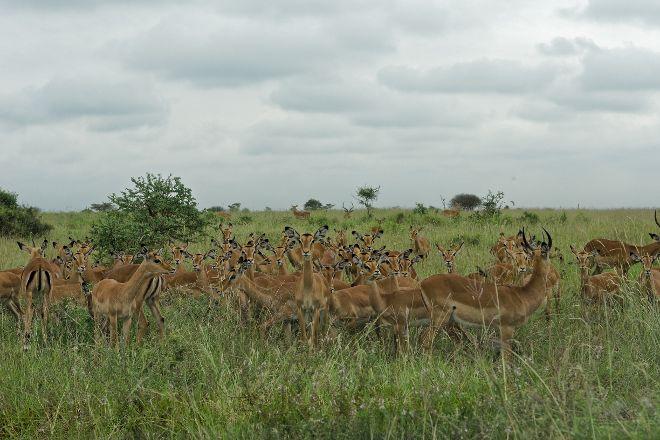 Nairobi National Park, Nairobi, Kenya