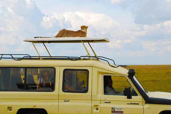 Steenbok Safaris and Car Hire, Nairobi, Kenya