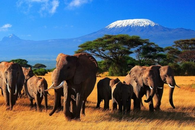 Wildlife Safari Exploreans Day Trips, Diani Beach, Kenya