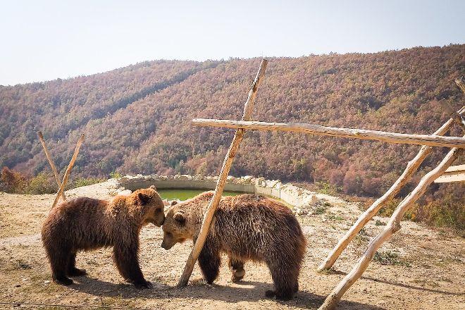 Bear Sanctuary Prishtina & Thesaret e Natyres, Pristina, Kosovo