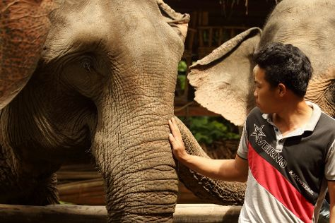 Mekong Elephant Park, Pakbeng, Laos