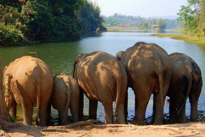 Elephant Conservation Center, Sayaboury, Laos