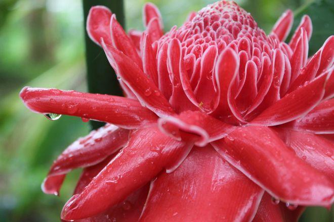 Pha Tad Ke Botanical Garden, Luang Prabang, Laos