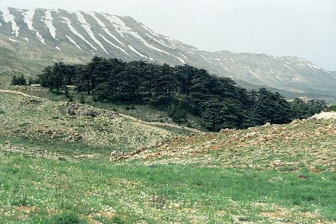 The Cedars of God, Bcharre, Lebanon