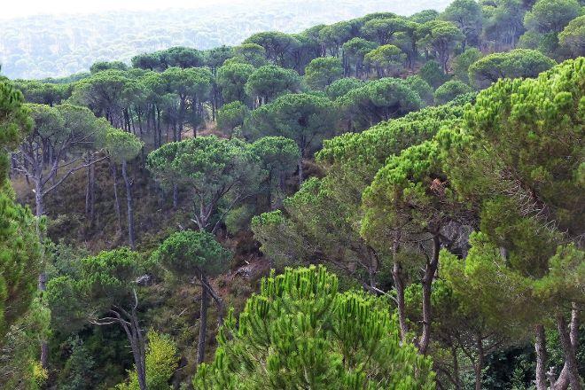 Bkassine Pine Forest, Jezzine, Lebanon