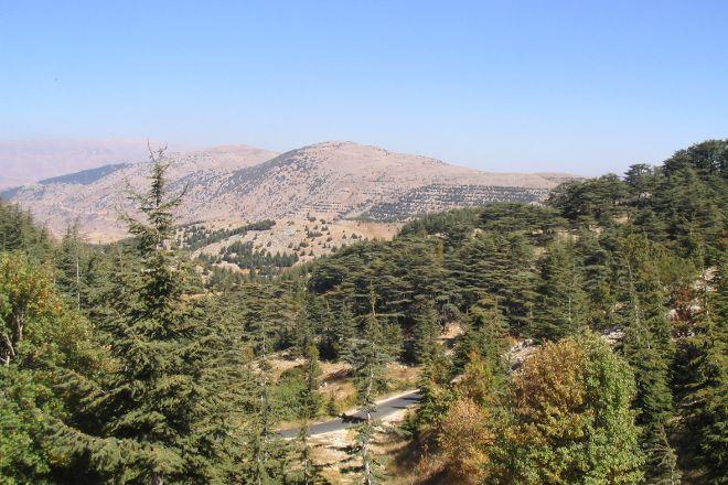Shouf Cedars Reserve, Barouk, Lebanon