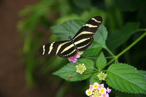 Jardin Des Papillons, Grevenmacher, Luxembourg