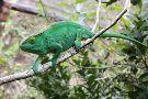 Réserve Peyrieras Madagascar Exotic