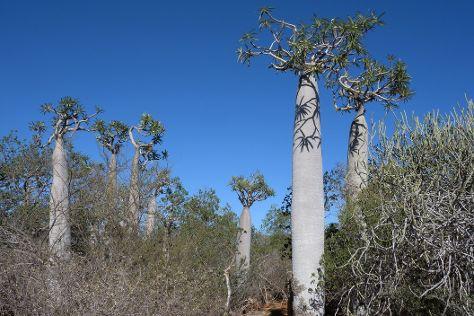 Parc National de Tsimanampetsotsa, Toliara Province, Madagascar