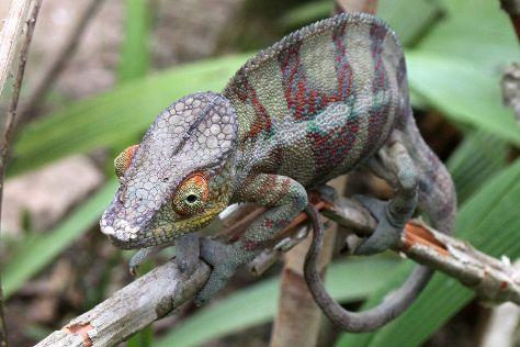 Reserve Peyrieras Madagascar Exotic, Marozevo, Madagascar